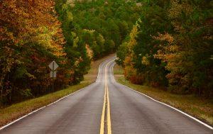 road between field of trees